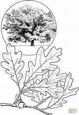 Oak Coloring Tree Pages Printable Drawings Fall Supercoloring Leaf Acorn Drawing Tattoo Colouring Leaves Patterns Clipart Sketches Autumn Pine Line sketch template