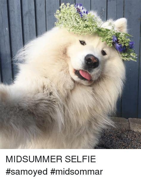 midsummer selfie samoyed midsommar selfie meme  meme