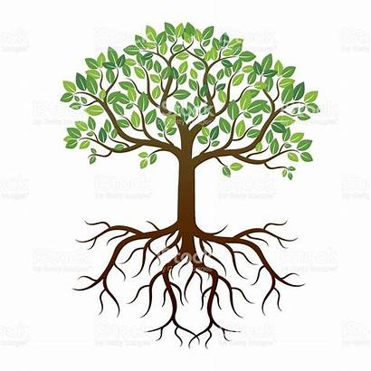 Roots Tree Drawing Trees Branches Leaves Trunk