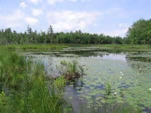 Wetlands Environment