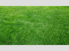 Only green grass background texture HD wallpaper