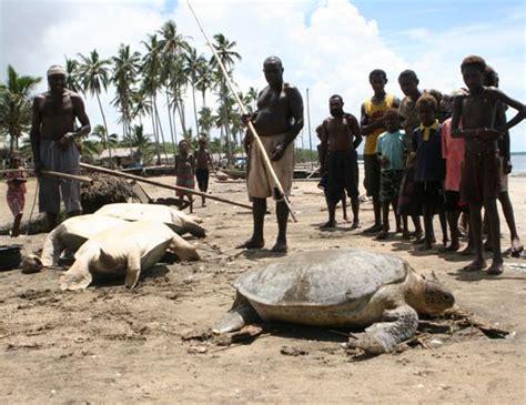 sea turtles threats sea turtle conservancy