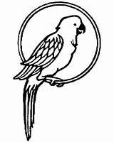 Parrot Coloring Pages Pet Parrots Pirate Printable Getcolorings Colornimbus Pag sketch template