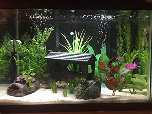 well planted 20 gallon aquariums google search pinteres With decorative fish tank ideas things to consider