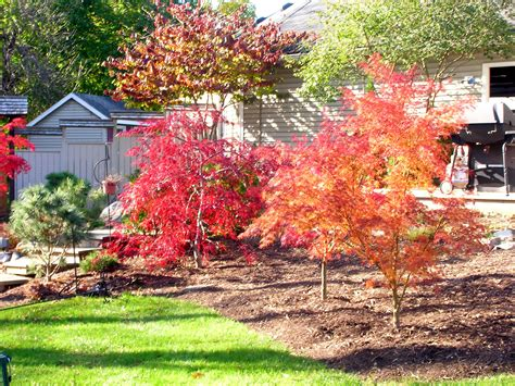japanese maple 301 moved permanently