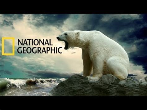 National Geographic Animals 2015 Grizzly Bear Attacks Full