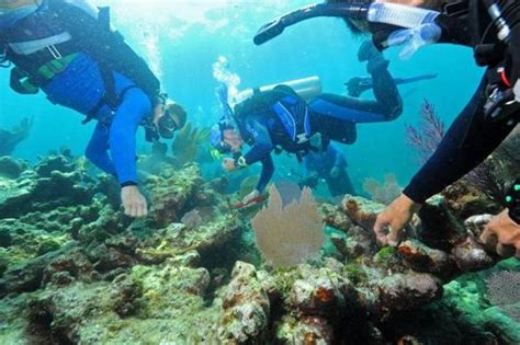 divers volunteer  revitalize  coral reef travel