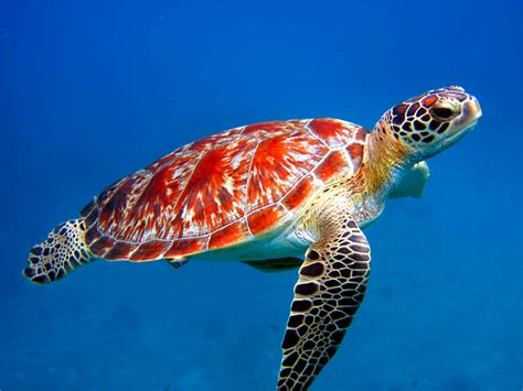 U Ni K Blog World Sea Turtle Day