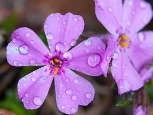 Daily Payne – Daily photo blog – Photography » Spring Rain