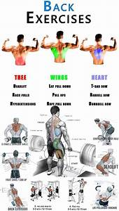 Top Best Back Exercises