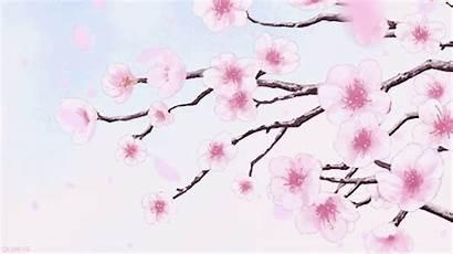 Cherry Blossom Gifs Tree Flower Language Okami