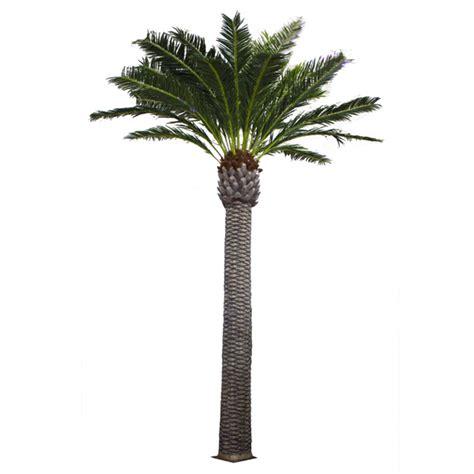 palmier d exterieur 28 images la culture des palmiers en ext 233 rieur la culture des