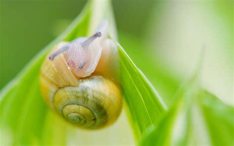 snail picture hd desktop wallpapers  hd