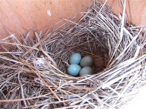 bluebirds are nesting patchwork times by judy laquidara