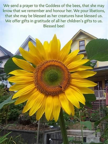 Memes Meme Sunflower Pagan Bee Quote Prayer