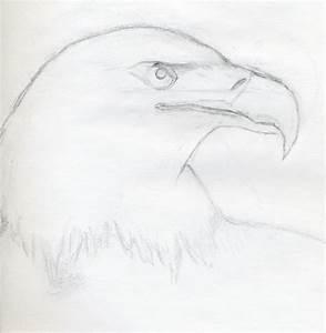 Photos: Eagle Eye Hd Pencil Sketch, - Drawings Art Gallery
