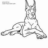 Dane Coloring Dog Drawings Drawing Line Stencil Animal Pages Danes Dogs Quilts Cute Sketches Own Draw Printable Puppy Colouring Sketch sketch template
