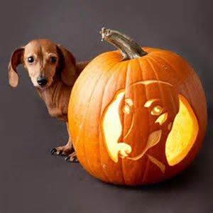 Happy Halloweenie Dachshund Pumpkin Stencil by Cute Halloween Dachshund Photo And Wallpaper Beautiful