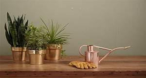 Pflanzen Die Nicht Viel Licht Brauchen : 5 zimmerpflanzen f r wenig licht unsere tipps f r zuhause ~ Markanthonyermac.com Haus und Dekorationen