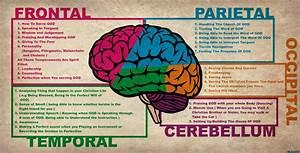 Anatomy Of The Brain Human Anatomy Diagram. Complete ...