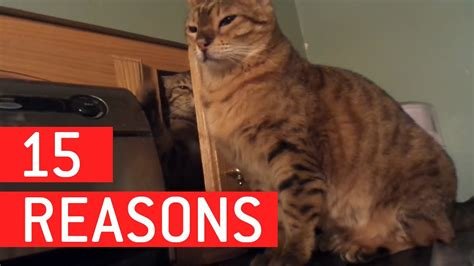 reasons  cats   worst funnycom