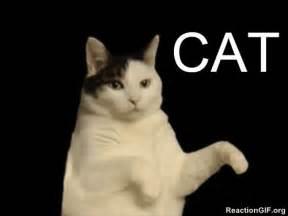 cat dancer gif cat kitty gif