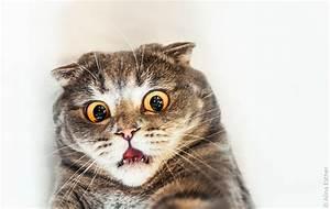 Denver Clinic plans to fix 10,000 more cats free, no ...