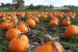 Pumpkin Ale–Mendo's Fall Release Mendocino Brewing