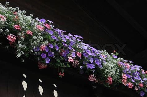 Wunderschöne Blühende Pflanzen In Blumenkästen Auf Dem