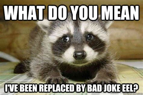 Bad Pun Raccoon Meme - what do you mean i ve been replaced by bad joke eel sad exlame pun raccoon quickmeme