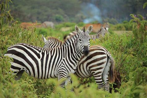 African Animals in Bali Safari Park Bali Safari Marine Park