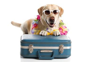 Zum Tag Des Hundes Tipps Für Das Reisen Mit Hund