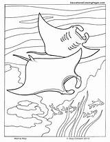 Coloring Pages Ocean Manta Fish Sea Ray Printable Animal Cuttlefish Colouring Animals Seashore Sheets Drawing Colouringpages Crafts Dolphin Creatures Adult sketch template