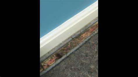 mold  carpet  baseboard trim  basement south