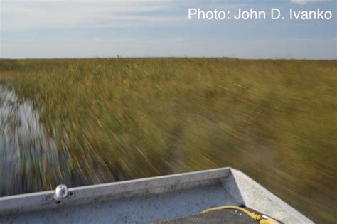 Airboat Expeditions by Airboat Expedition Of The Everglades Airboat In