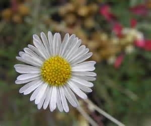 Small White Flowers Names