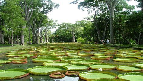 Botanischer Garten Cluj by National Botanical Garden Of Mauritius Afro Tourism