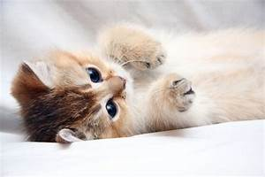 Cats Cute HD Wallpapers 2015