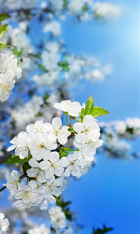spring flowers wallpaper  android apk