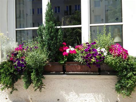 Blumenkästen Bepflanzen Ideen by Balkonkasten Bepflanzung Mit Immergr 252 Nen Koniferen Und