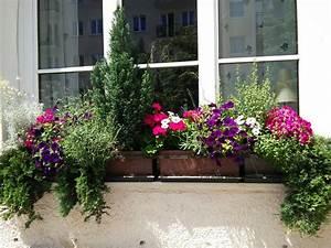 Blumenkästen Bepflanzen Ideen : balkonkasten bepflanzung mit immergr nen koniferen und ~ A.2002-acura-tl-radio.info Haus und Dekorationen