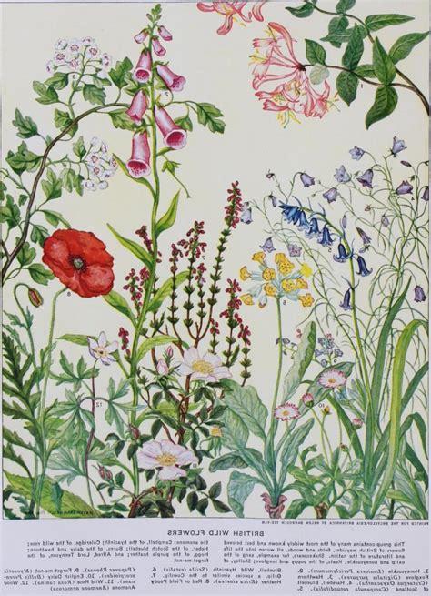 flower encyclopedia photo encyclopedia flowers
