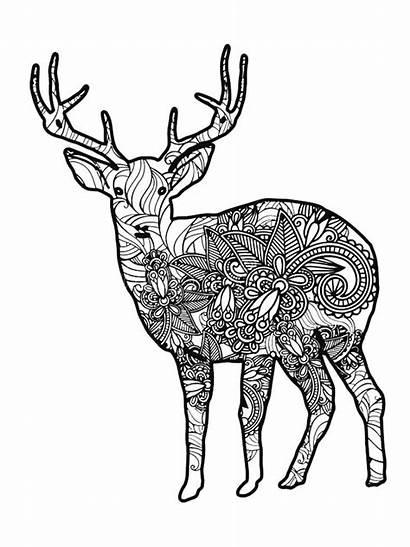 Coloring Deer Zentangle Adults Adult Mycoloring Printable