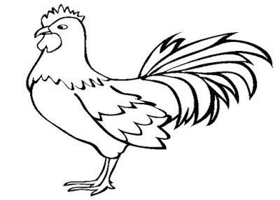 Gambar Mewarnai Binatang Ayam Collection Images