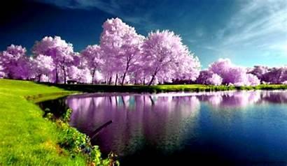 Spring Nature Scenes Wallpapersafari Amazing Wallpapers
