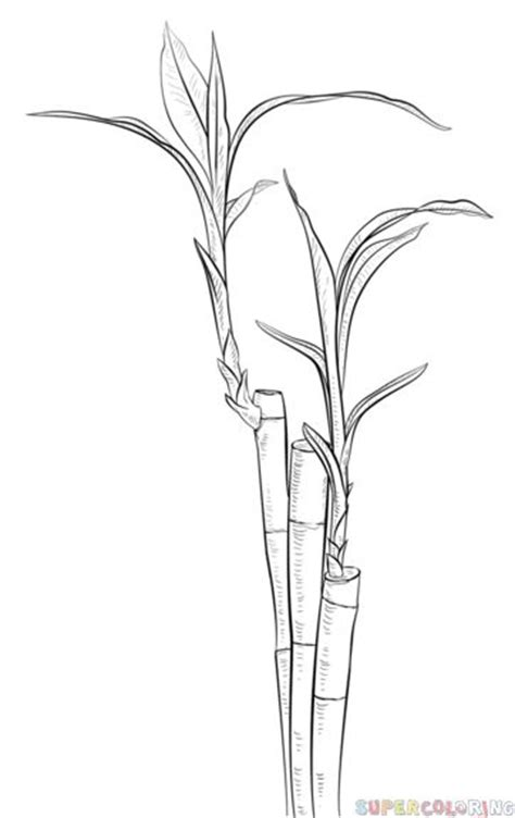 draw  bamboo step  step drawing tutorials