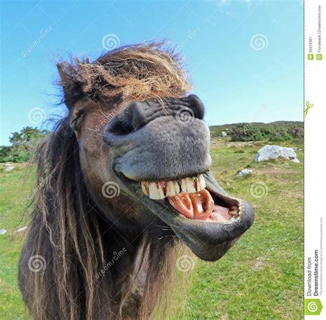 laughing horse stock image image