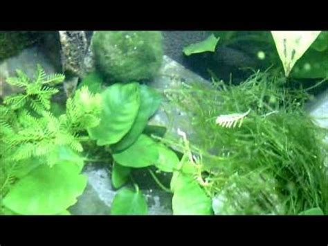 The New Fluval Edge 46l Aquascape With Co2 Week One Youtube