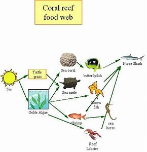 Great Gigs  Coral Reef Food Chain Pictures