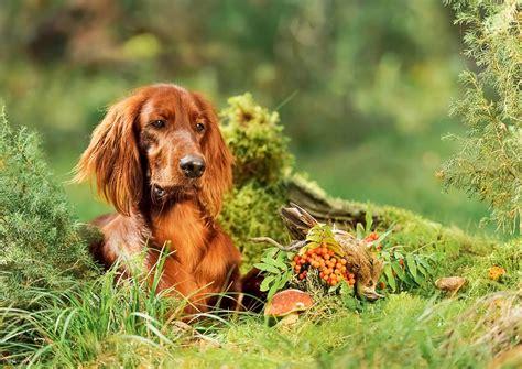 Hund Hat Pilz Im Garten Gefressen by Giftige Pflanzen F 252 R Hunde Diagnose Symptome Tractive